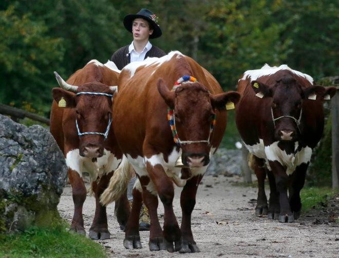 Germany Herdsmen Koenigssee